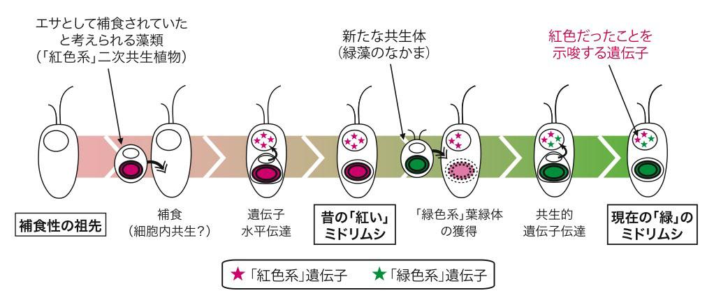 細胞小器官 ミドリムシ 第46回